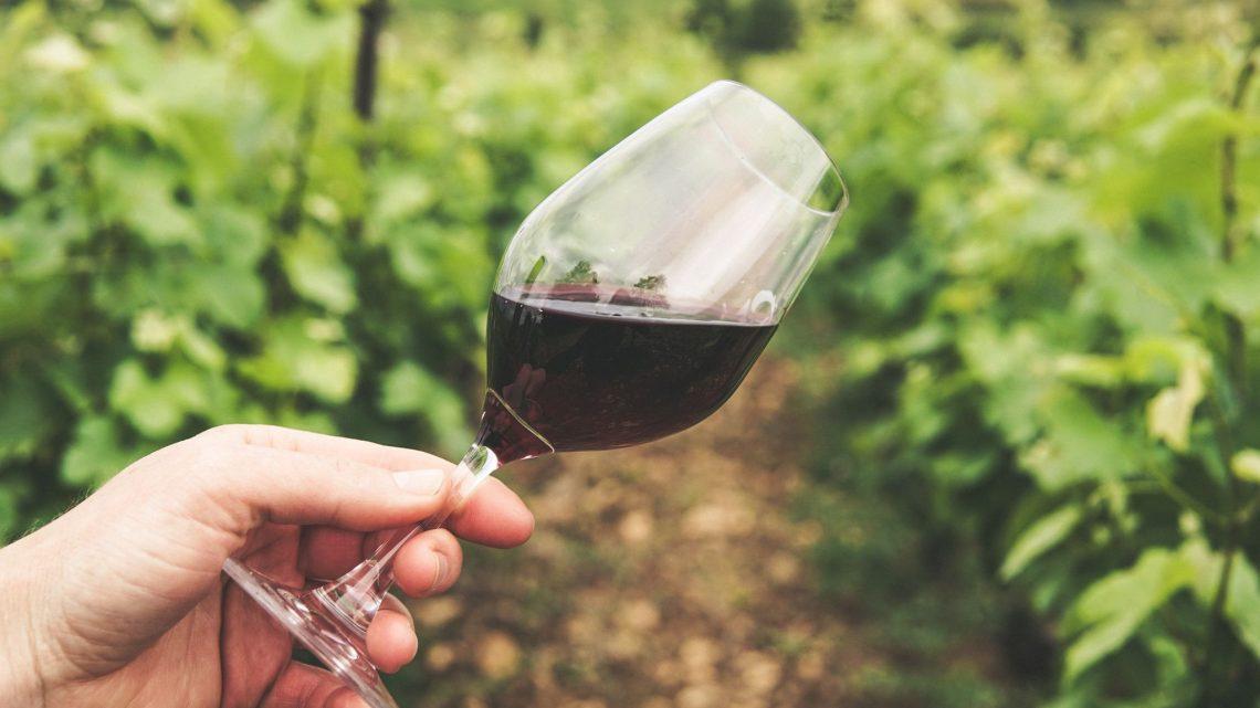 Traversez la Route des Vins d'Alsace